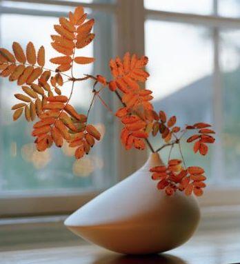 El otoño para las plantas