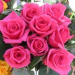 Wallpapers de rosas 2