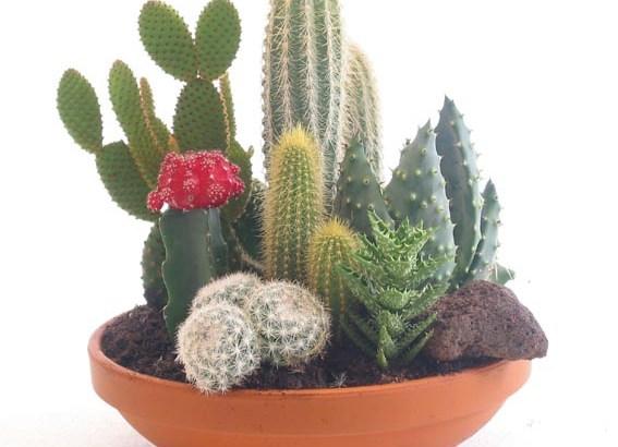 Plantas que toleran calefacciones
