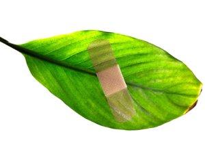 Cómo proteger las heridas de las plantas 1