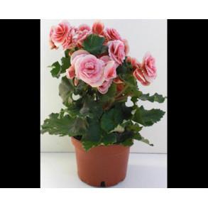 Síntomas de falta de humedad en las plantas