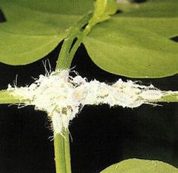 Insecticida casero para tus plantas 2