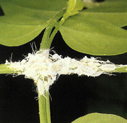 Insecticida casero para tus plantas
