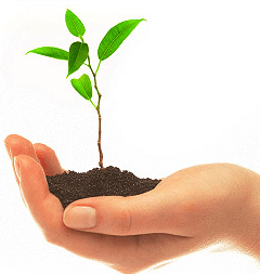 Consejos para las semillas
