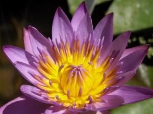 Flores hechas con macro 4