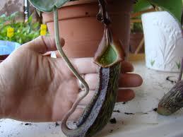 Mi planta se seca