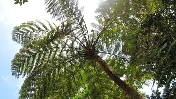Jardín Botánico Mundani
