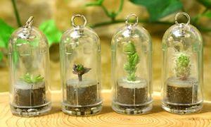 Plantas en llaveros