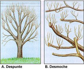 La poda de árboles
