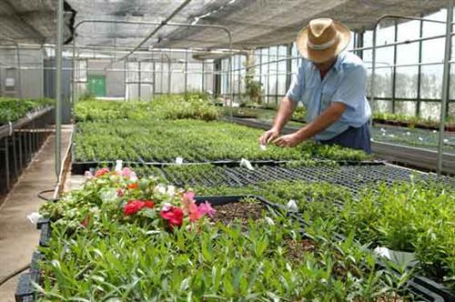 Opciones en jardinería