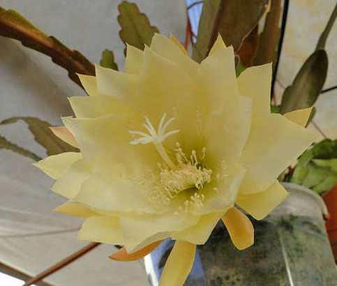 Sustrato para cactus epifitos