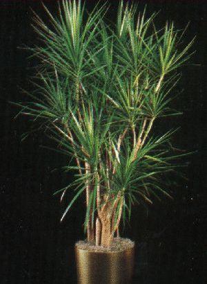 Plantas de interior sencillas