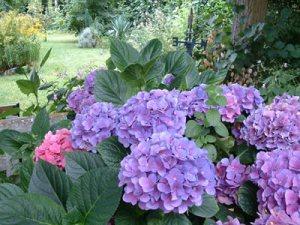 Las flores más usadas en jardines