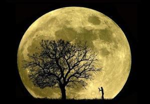 Influencia de la luna sobre las plantas