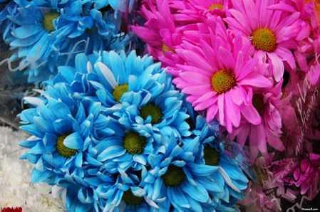 El significado del color de las flores