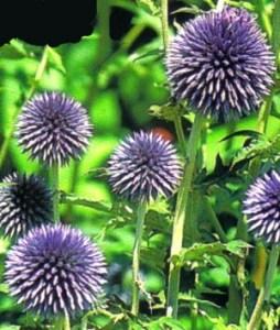 Plantas resistentes a manos inexpertas