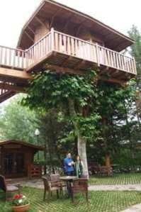Casas en los árboles 1