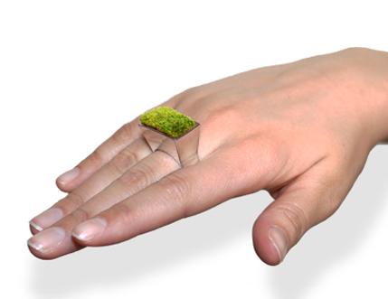 Una planta de anillo