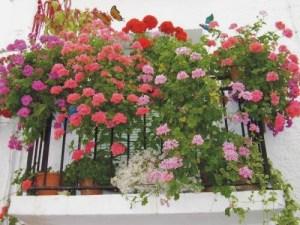 Decorar el balcón con plantas