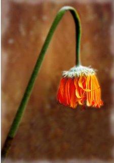 Las flores también enferman