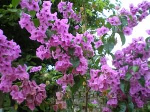 La Santa Rita que no florece