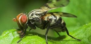 Adiós a las moscas de tu jardín