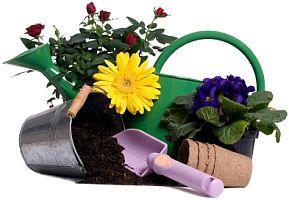 Consejos para los nuevos jardineros