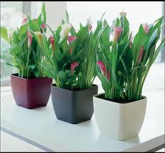 Trucos para tus plantas de interior
