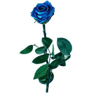¿Te gustan las flores azules? 2