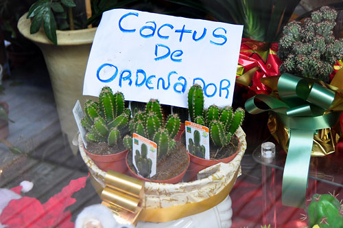 Cactus contra radiaciones, ¿mito o realidad?