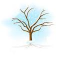 Tiempo de plantar la albahaca 1