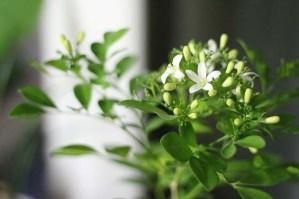 Trasplantes a las plantas
