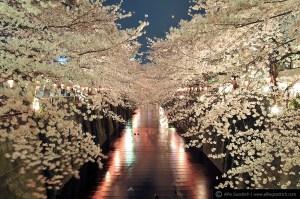 Hanami: Deleitarse observando florecer a los árboles 2