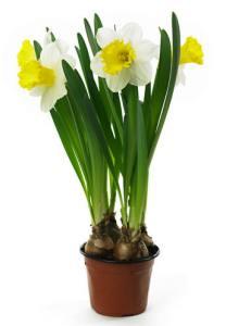 Bulbos de Primavera - Bulbos de Otoño 3