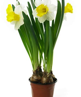 Bulbos de Primavera – Bulbos de Otoño