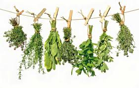 Infusiones para cuidar tus plantas 1