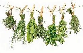 Plantas para infusión
