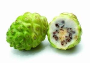 El Noni: Morinda citrifolia, árbol de la fruta prodigiosa. 2
