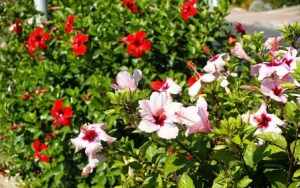 Jardines: tareas de abril 4