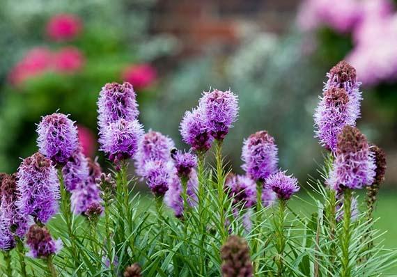 Flores y plantas para primavera