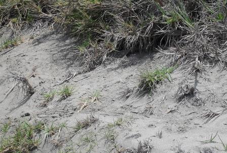 Tipos de suelo para plantas