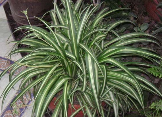 Consejos sencillos para mantener bien a una planta