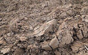 Tipos de suelo para plantas 7