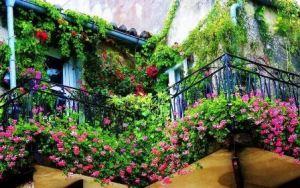 Balcón flores y trepadoras
