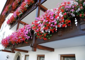 Plantar en balcones 3