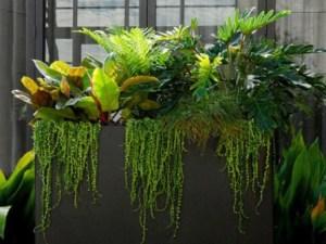 Plantas de hoja verde