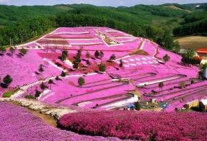 El parque Higashimokoto, jardín de Flox Musgoso 1
