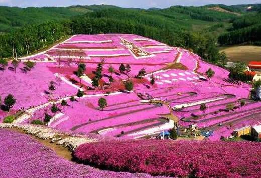 El parque Higashimokoto, jardín de Flox Musgoso