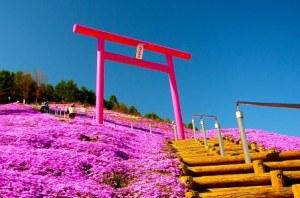 El parque Higashimokoto, jardín de Flox Musgoso 3