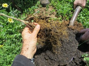 Agricultura regenerativa1